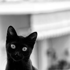 ⓛ . ⓛ (Color-de-la-vida) Tags: cat chat gato gatita colordelavida estodanegrasedicequedasuerte ninasellamanina