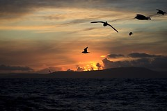 Sunset (Jannis Srensen) Tags: ocean sunset sea birds islands faroe froyar slsetur nlsoy