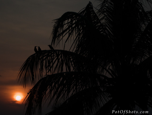 crow and the sunset2