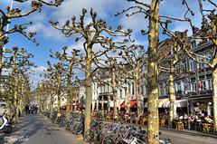 Vrijthof (Janslb) Tags: city trees maastricht geotagged raw hdr limburg vrijthof 1exp