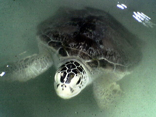 Turtle, Malaysia. Photo by Hong Meen Chee, 2005