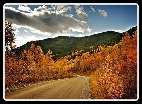 Blazing Trail by Nancy Hawkins