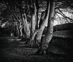 AUTUMN WALK (B/W) (kenny barker) Tags: autumn bw tree art monochrome landscape scotland bravo north alberoefoglia panasonicg1 kennybarker