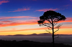 Sunset from Ros Hill (Ewen K) Tags: uk sunset tree silhouette nikon northumberland hepburn cheviots scotspine thecheviots hedgehopehill thecheviot d40 roshill