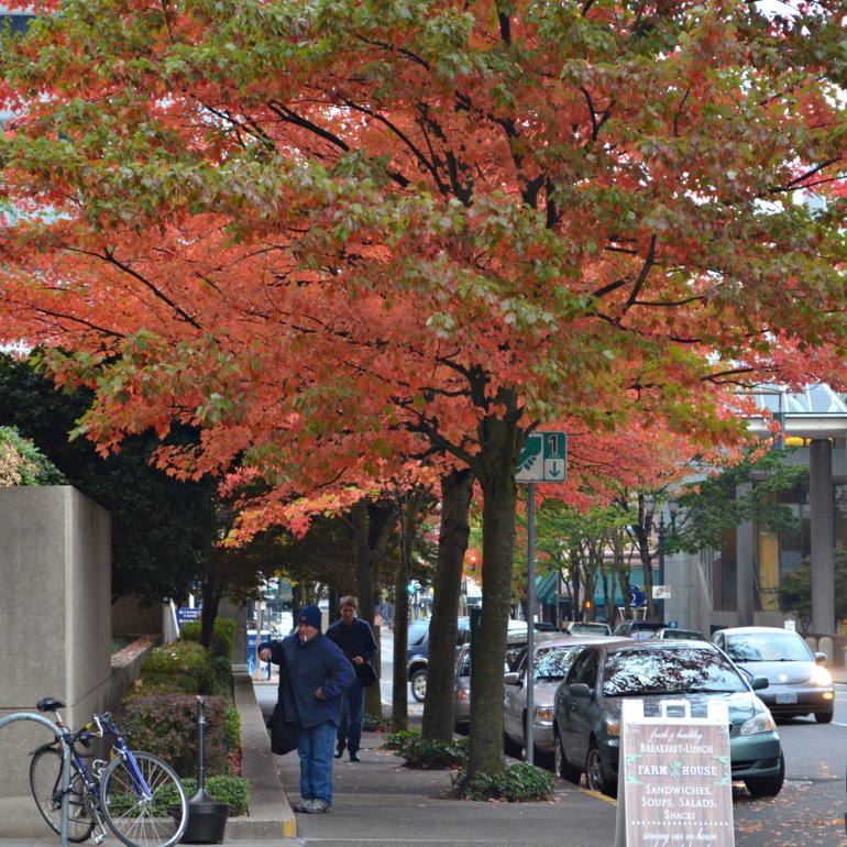 DSC_0480p_fall_foliage_1st_and_main