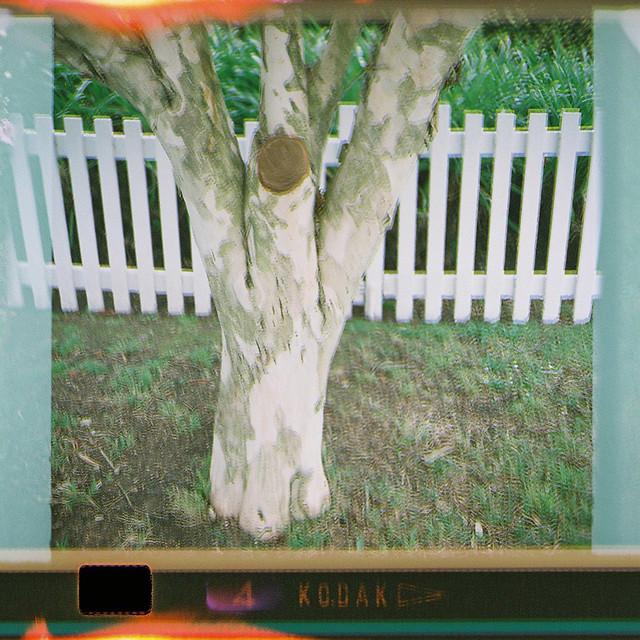 126-4_tree