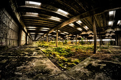 urbex (geopalstudio) Tags: fish samyang d7000 promoteremotecontrol
