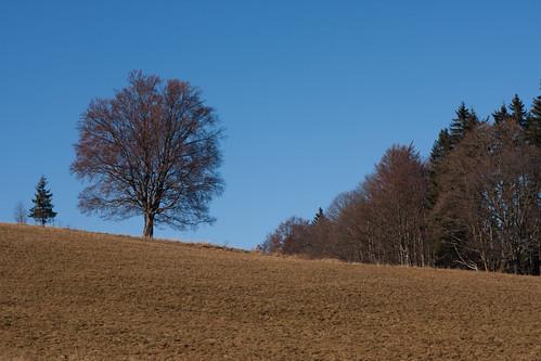 036 Strom nad Oním Světem