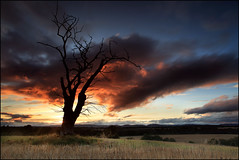 Dead Tree @ Sunset Strathmore (angus clyne) Tags: new old uk light sunset shadow red cloud dog storm tree field wall forest canon fence dark hope evening coast scotland europe time angus farm under over perthshire scottish glen tay filter cover bark lee nd law finn mound fleeting dri clyne clump colorphotoaward saariysqualitypictures