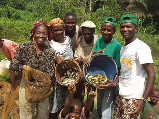 Aquaculture, Cameroon. Photo by Jean Michel Abo'o Medjo, 2008