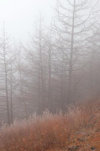 ★霧氷★富士山から・・・