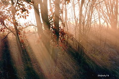 magical light (stefady78) Tags: italy panorama nature fog canon eos woods natura 105 luce bosco monferrato magica sigma105 odalengo 600d magicallight lucemagica valcerrina flickraward5