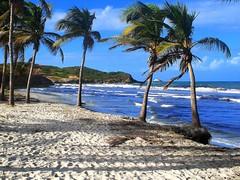 Caribbean paradise (mujepa) Tags: ocean blue sea mer beach southamerica island sand paradise waves venezuela sable playa bleu palmtree margarita carib vagues coconuts paradis palmier noixdecoco thegalaxy elagua worldwidelandscapes panoramafotogrfico mygearandme ringexcellence bbng rememberthatmomentlevel1 magicmomentsinyourlifelevel1 rememberthatmomentlevel2 rememberthatmomentlevel3