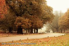 "Road in Richmond Park <a style=""margin-left:10px; font-size:0.8em;"" href=""http://www.flickr.com/photos/24828582@N00/6384686851/"" target=""_blank"">@flickr</a>"