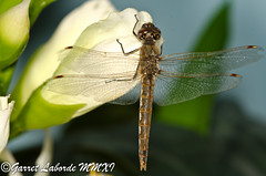 _GPL1850.jpg (The Fantastic G) Tags: november macro texas houston 20 insecta 2011 harriscounty sbr200 nikonr1system nikond7000 20111120 sigma150mm28exapodghsmmacro sigma14xtcapodgex