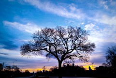 City Limits (Doug Wallick) Tags: tree minnesota silhouette skyline sunrise glow minneapolis baren target picnik lightroom a230 highway55 mygearandme mygearandmepremium mygearandmebronze mygearandmesilver mygearandmegold