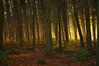 Fall 005 (Painted Elk) Tags: autumn light colour fall landscape utatafeature flickraward nikonflickraward nikonflickrawardgold flickraward5 nikonflickrawardplatinum flickrawardgallery badmanproduction