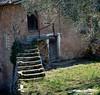 la maison rose et l'olivier (b.four) Tags: house casa staircase maison escalier olivier olivetree alpesmaritimes lantosque ruby3 coth cherryontopphotography rubyphotographer mygearandme moyennevésubie ruby10 ruby15 lesclapières ruby20