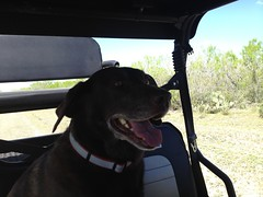 """Driving Ms. Hershey • <a style=""""font-size:0.8em;"""" href=""""http://www.flickr.com/photos/77680067@N06/6879440902/"""" target=""""_blank"""">View on Flickr</a>"""