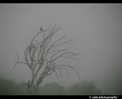 MIST (SULAIMAN..SAY CHEEEEES) Tags: morning india mist tree bird nature beauty cool friend flickr tour kerala wyanad flickraward karappuzhadam rememberthatmomentlevel1 suluphotography