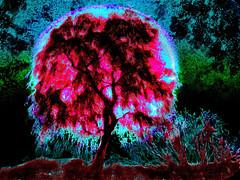 Kalil Tree in Bloom (Rusty Russ) Tags: sunset arizona tree colors night photoshop sunrise yahoo google flickr image manipulation bloom bing facebook stumbleupon daum kalil