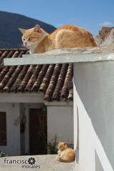 Al sol (Francisco J. Morales) Tags: granada trevelez taha alpujarra capileira portugos busquistar pitres castaras