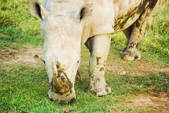"PhotoFly Travel Club Kenya Safari 2011! • <a style=""font-size:0.8em;"" href=""http://www.flickr.com/photos/56154910@N05/5892986124/"" target=""_blank"">View on Flickr</a>"