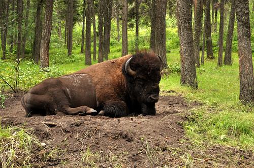 montana july 2011_1846