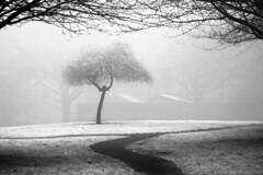 6 (AntoniGeorgiev) Tags: trees reflections seasons branches milkywater landscapeshots antonigeorgiev