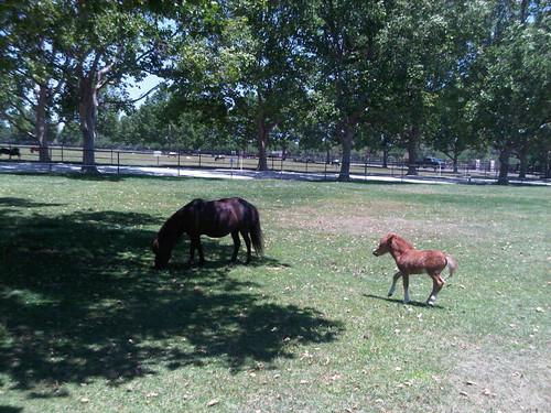 Mini-Mini Horse