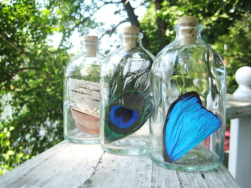 Simple Pleasures. birch bark, peacock feather, blue morpho butterfly wing by PoPkO!
