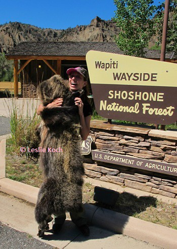Shoshone National Forest bear attack
