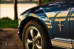 #42 Confident, Powerful, and Stylish Monster. (Abdulla Attamimi Photos [@AbdullaAmm]) Tags: blue ford sport speed photography photo nikon photos fast photographic shelby mustang gt speedy eleanor fordmustang 2008 v8 2010  abdullah amm    d90   tamimi          attamimi     desamm altamimialtamimi     abdullaammnet abdullaammcom
