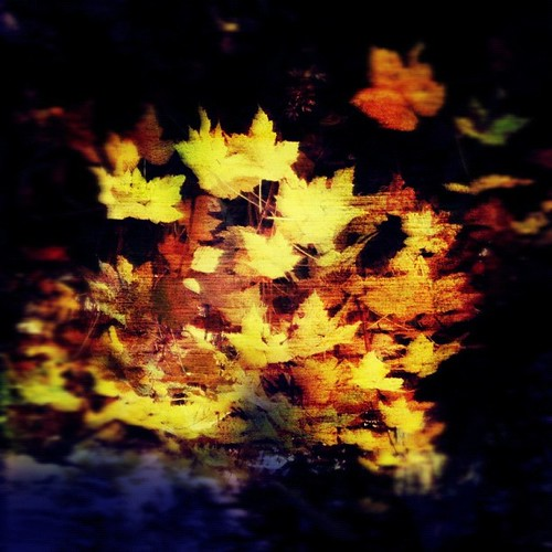 Turning Leaves by Mary Sherman