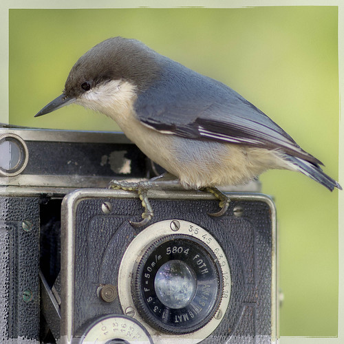 Joy of Photography