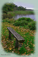 Doorly Park Bench (fitzinthehome) Tags: wood ireland lake grass leaves reeds bench wooden log lough seat country yeats gill sligo loughgill pregamewinner