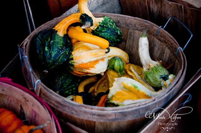 Pumpkins 104