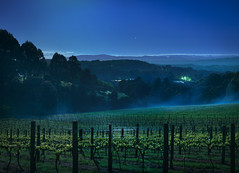 Dreamtime (Ranga 1) Tags: longexposure nightphotography mist night stars vineyard nikon australian australia melbourne victoria grapes moonlight mountdandenong dandenongs dandenongranges davidyoung thedandenongs thepatch flickraward afsnikkor50mm14g