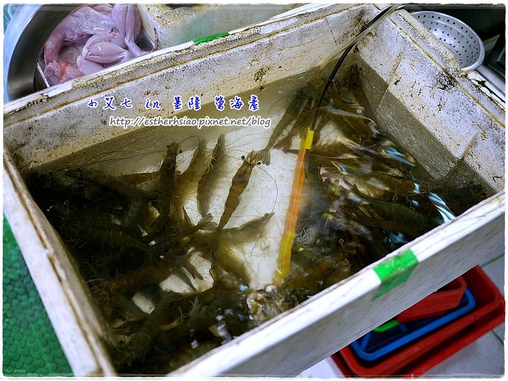 7 活蝦們