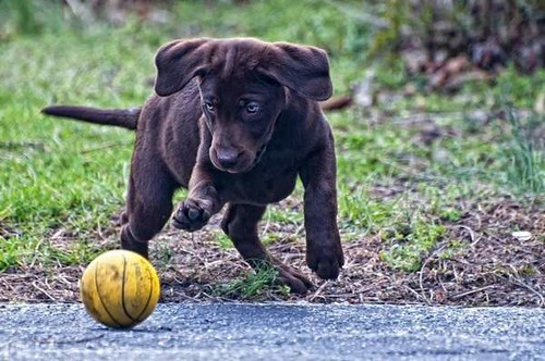 WSFS Pet Photo Contest Winners 02