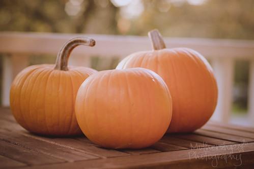 300:365 Three little pumpkins