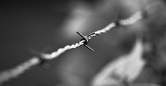 Barbed Wire (gstening) Tags: morning blackandwhite bw canon eos wire dof bokeh barbedwire barbed 60d canoneos60d ef100mmf28lmacroisusm