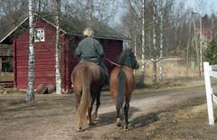 Kuu käsihevosena (smerikal) Tags: horse ride foal varsa finnhorse ratsastaa käsihevonen