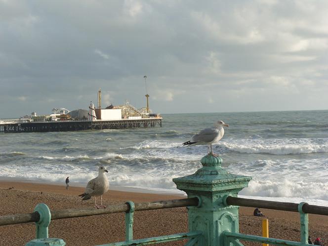 Gulls_sea