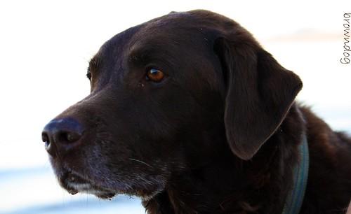 Jackson Browndog