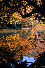 Autumn reflection (Riccardo Brig Casarico) Tags: autumn italy lake flower reflection verde green nature water colors animals alberi photography photo reflex nikon europa europe italia colours foto details dettagli fotografia fiori nikkor acqua autunno colori riflessi prato atmosfera animali 18105 atmosphre d5100