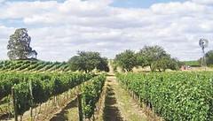 La provincia de Buenos Aires también tendrá su ruta del vino