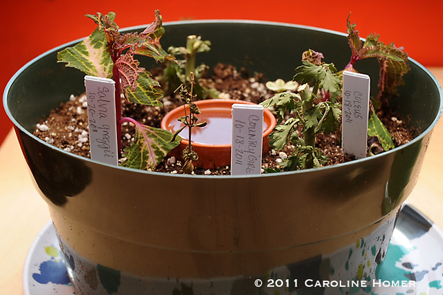 Self-watering rooting dish