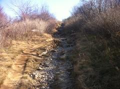 Chunky Sam Knob Trail
