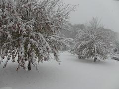 October snow (11)